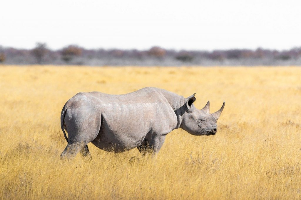 Our Planet, Rhino, Africa, Destinations