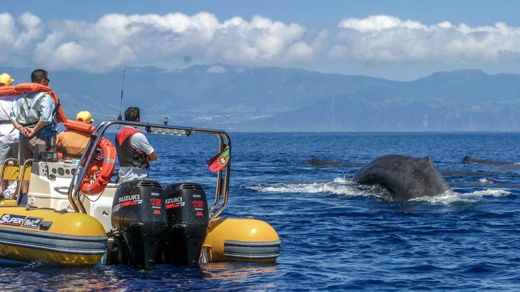 Whale and Dolphin watching from Sao Miguel The Azores